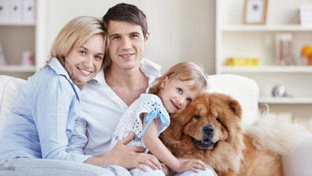 Wills & Trusts dog-young-family Direct Wills Hampshire